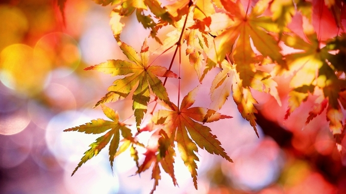 10월-11월 예배와 교회 행사